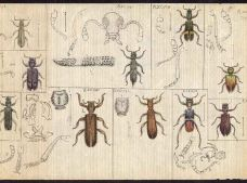AA867-4_Insects_pg1.jpg