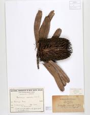 Banksia-Historical.jpg