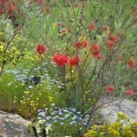 Wildflowers_UWA.jpg