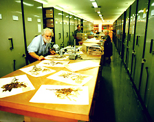 state-herbarium-vault.jpg